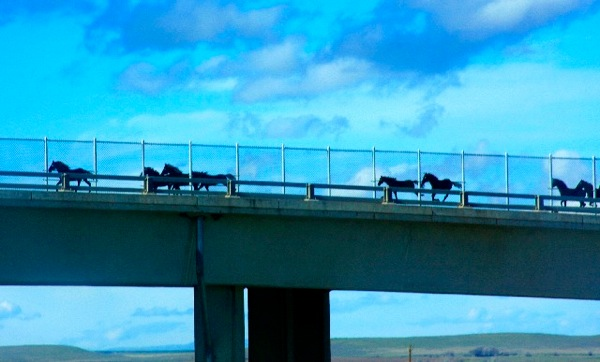 Horse Silhouetes On The Overpass